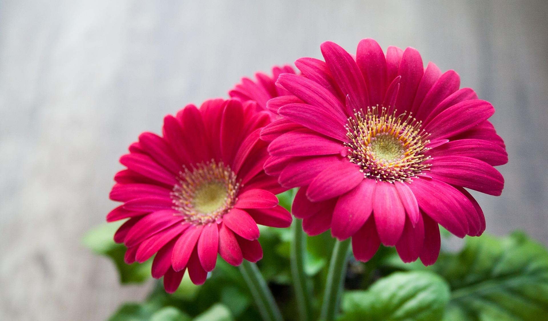 flower-631765_1920